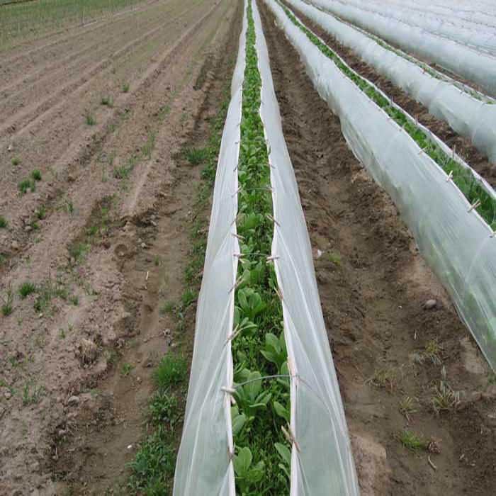 Sunshine PP Non Woven Fabric for Agriculture Cover Fabric Roll