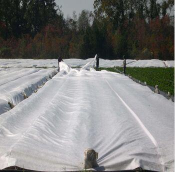 17g 6.5m Width 3% UV Agriculture Ground Cover Nonwoven