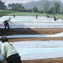 Non Woven Raw Material for Agriculture