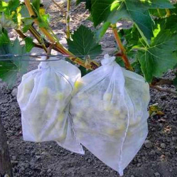 Agriculture Non Woven Cloth, TNT Textile for Fruit Cover