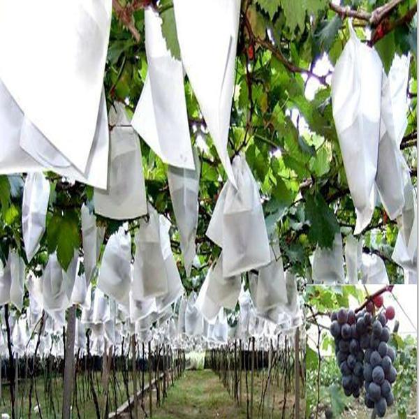 Low MOQ Nonwoven Fabric Plant Cover / Nonwoven Banana Cover Bag
