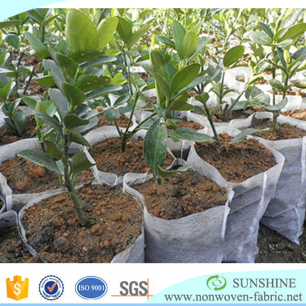 Protection Banana bag Agriculture Non Woven Fabric