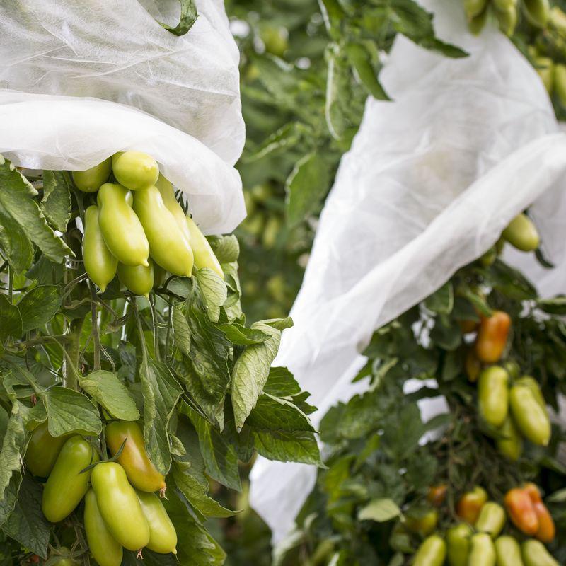 Nonwoven fabric fruit protection banana bag