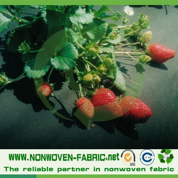 PP spunbond nonwoven agriculture white roll/100% polypropylene agriculture product/eco banana bag non