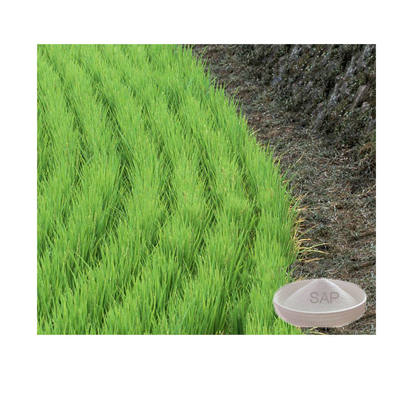 Grade Biodegradable Super Water Absorbent Polymer for Agriculture with Factory Price