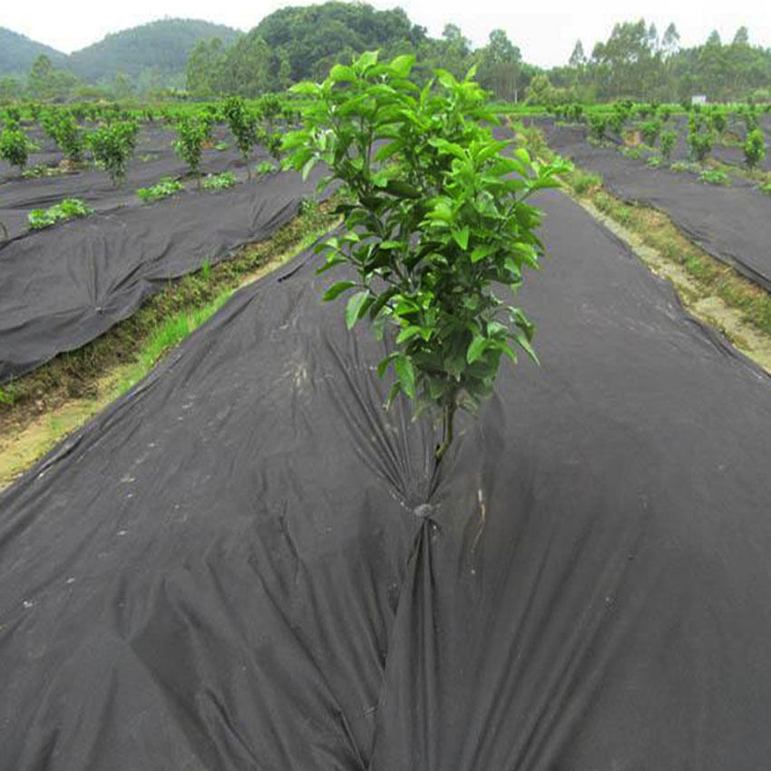 Gardening PP non-woven fabric 40gsm for protection frogst