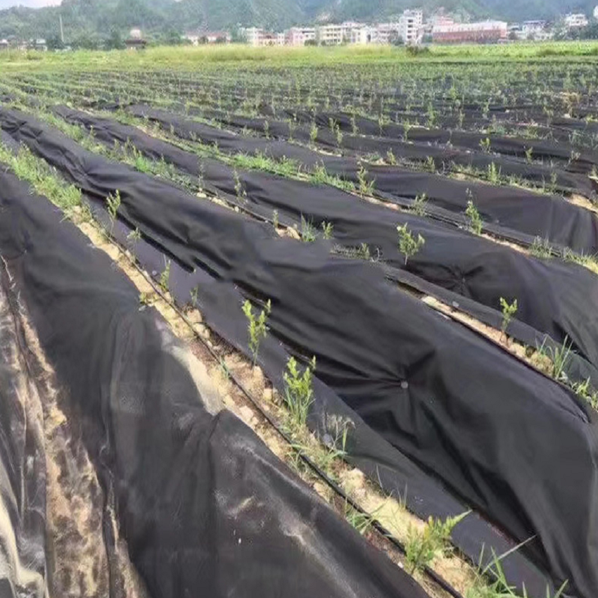 Factory customized environmental protection and practical hot sale gardening PP non-woven fabric