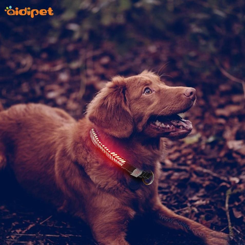 High Light Glowing Leather Dog Collar, Adjustable Led Dog Collar And Leash