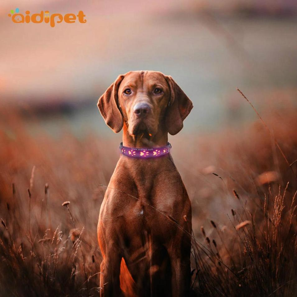 Popular hot sale pet accessory Hollow Printing Led Pet Collar