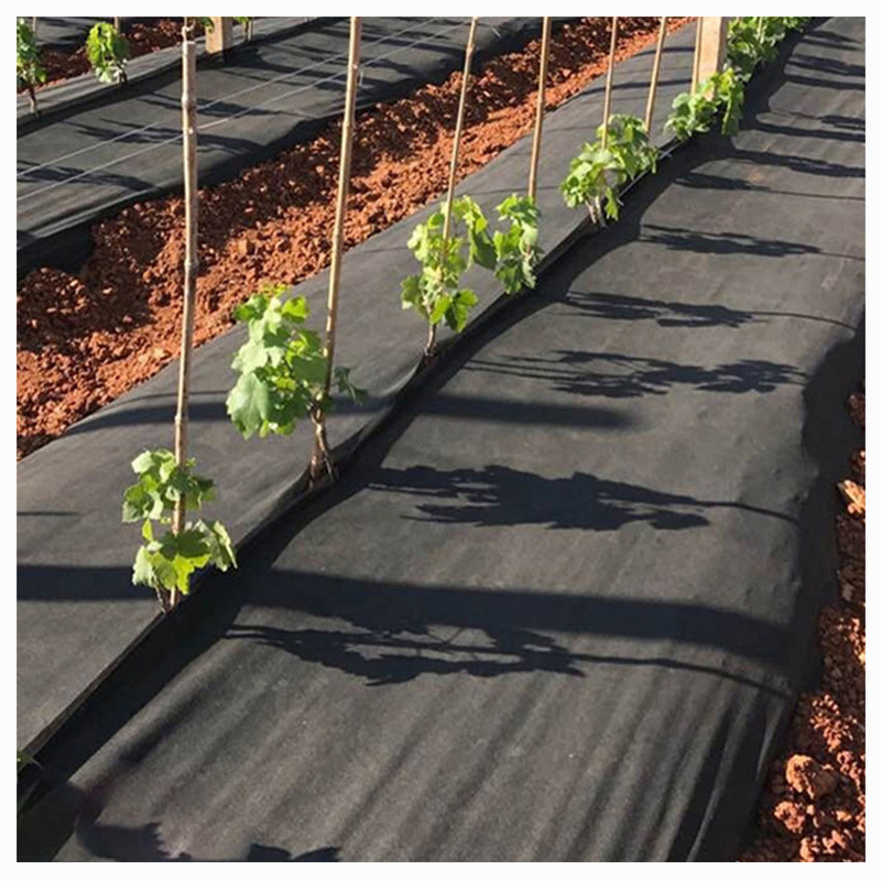 Factory customized arrival gardening PP non-woven fabric is degradable and pollution-free