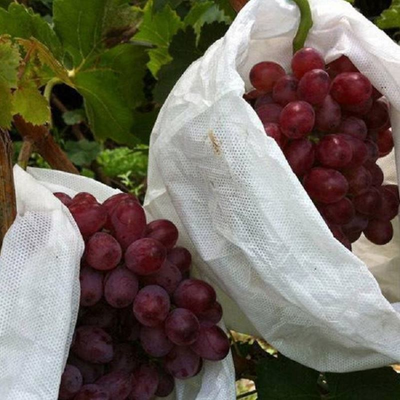 Manufacturers custom-made agricultural non-woven fruit bags are environmentally friendly and clean without pollution