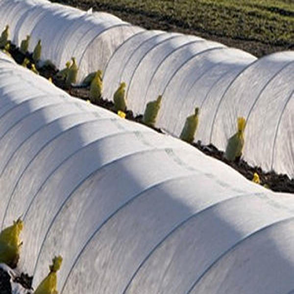 PP Agriculture Nonwoven Fabric for Plant Cover in China Factory