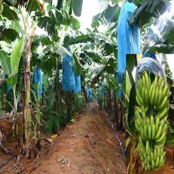 Environmental protection biodegradable non-woven fabrics
