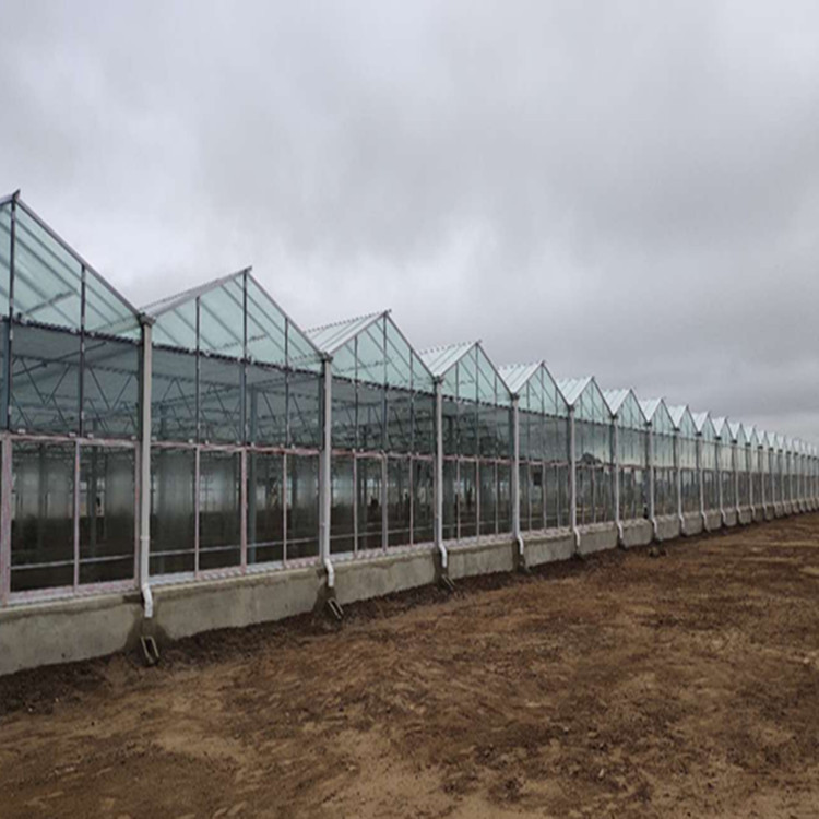 Prefabricated Steel Structure Green House