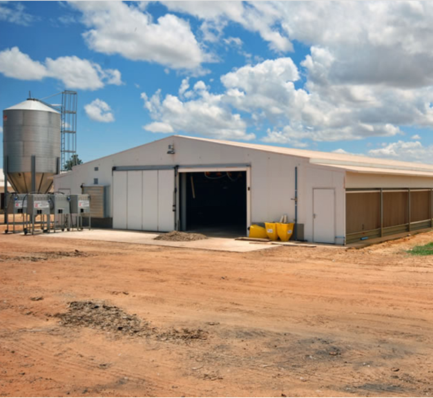 large span automatic poultry farm design for broiler chicken