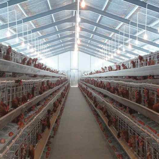 2019 layer chicken cagebroiler steel structure