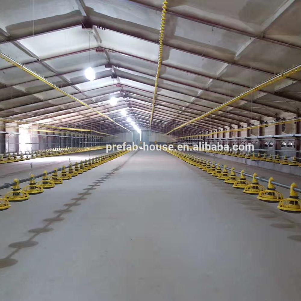 Poultry house price 3000,5000,15000 birds with competitive price