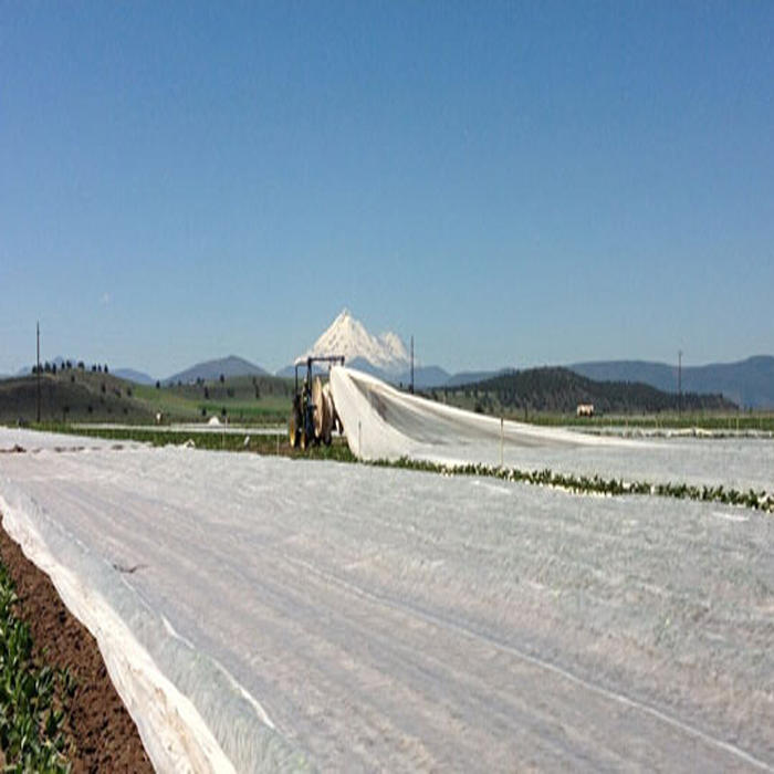 15-100Gsm White Agriculture Ground Cover ,Black UV 10-50M Rolls Pp Spunbond Non Woven FabricFor Agriculture