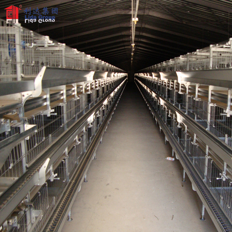 Large-scale automatic poultry farm design in broiler, layer poultry farm design