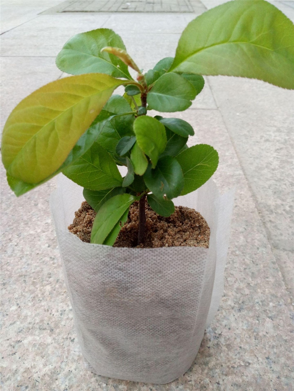grow bags plastic black seedling planting bag for agricultural
