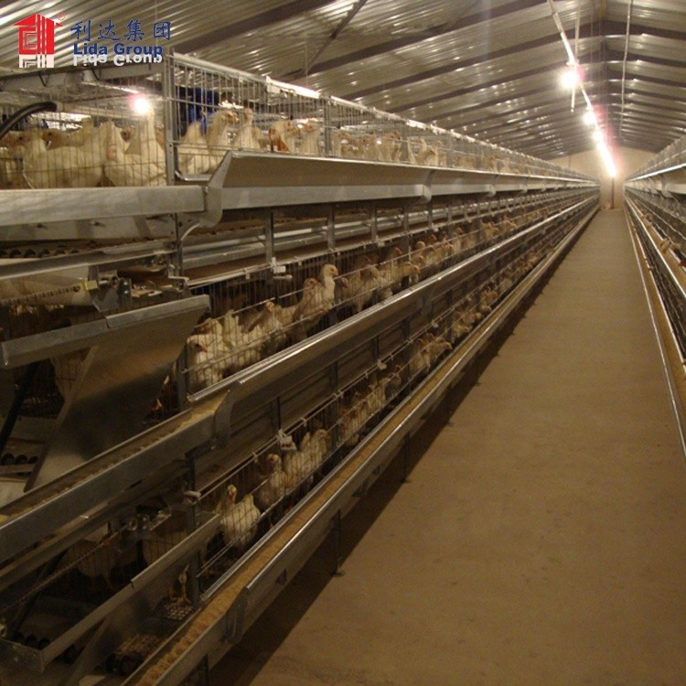 High quality heat proof poultry farm business plan in marathi language chicken house for sale for Guinea
