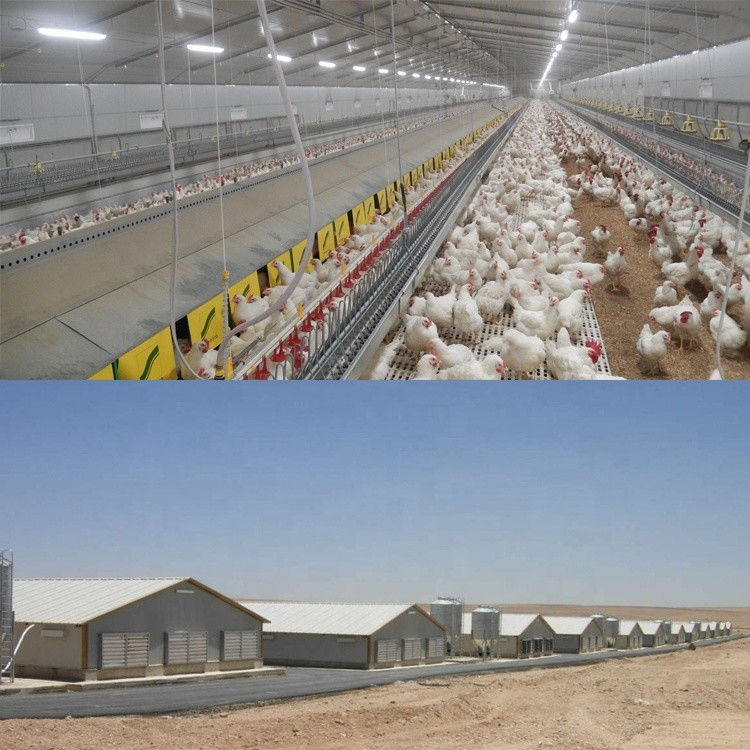 chicken poultry farm house design for layers in kenya farm in china