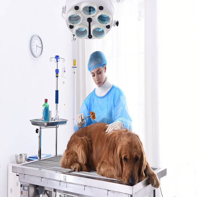 Medical Vet Surgery Table Veterinary Operating Table Equipment
