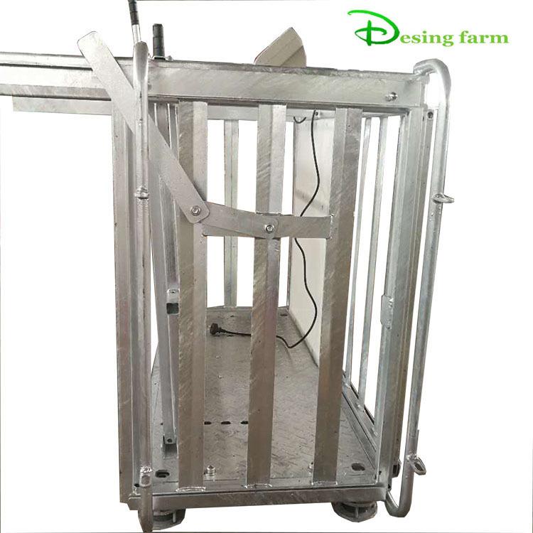 hot dip galvanized metal sheep weighing scales